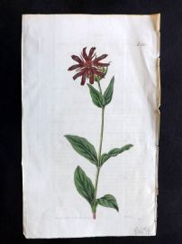 William Curtis 1819 Antique Botanical Print. Fulgent Lychnis 2104